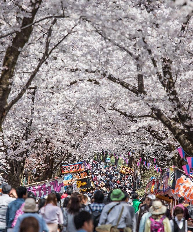 20200213赤城南面千本桜